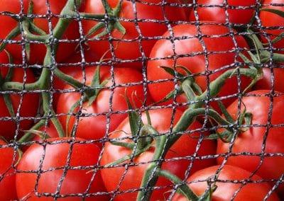 Tomaten Leiden markt